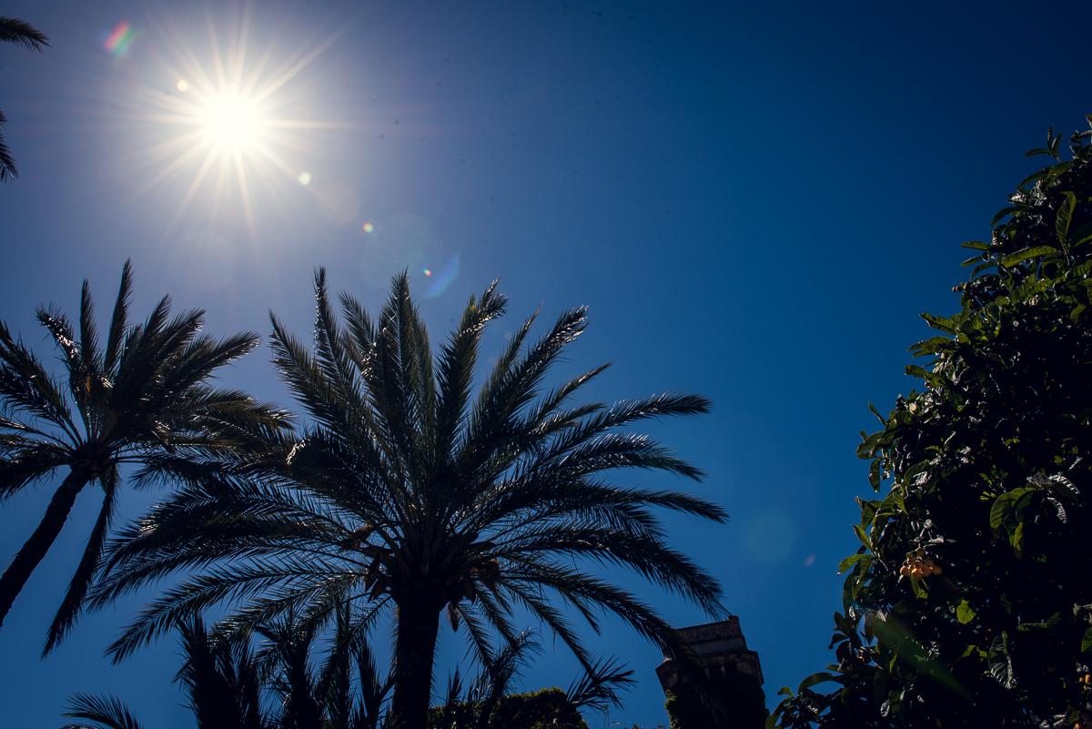 palm trees in casa santonja spain